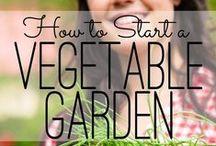 Garden & Yard / Garden | Yard | Tips | Plants | Planting | Home | Backyard | Family | Kids | Crafts | DIY