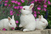 Bunnies / by Leona Eunice Gentry