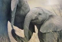 Elephants / by Leona Eunice Gentry
