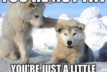 Cosas de veterinarios. / A veces hace falta un poco de humor.