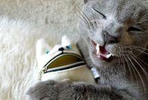 Just cats / Small cats, big cats, and kittens / by Jennifer Miranda