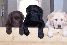 Doggies!!! / Dogs and puppies / by Jennifer Miranda