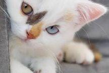 gatinhos / vai que é tua leandro
