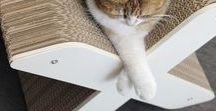 HOMYCAT | Un chat à la maison / www.homycat.com