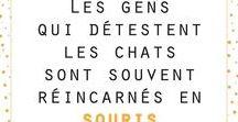 HOMYcitations / #chat #maison #design #déco #griffoir #animal #madeinfrance #homycat #miaou #lifestyle #cutecat #cutecats #meow