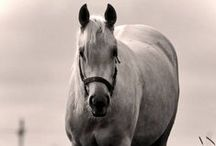 Horses / by Sophie`s Corner