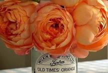 beautiful blooms / flowers / by Lisa Toyosaki
