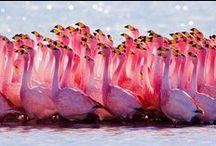 flamingó <3