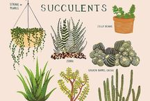 Succulents / by Taylor Glover