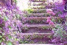 Home: Garden / by Alia Elnahas, Realtor