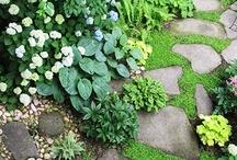 gardening ideas / by Kathy Garcia