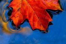 Autumn {ambiance}