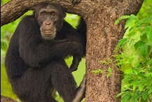 Monkey Business / They always manage to make me smile / by Wilna Van Schalkwyk