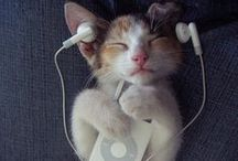 Tech-Savvy Pets / Pets that probably love Pinterest just as much as you do!