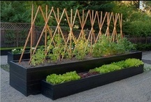 Garden adventures / Inspiration for our gardening learning curve