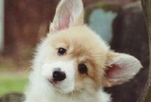 That look! / Who can say 'No!' to a dog with their head tilted and their ears perked up!?