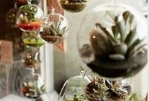 Air palnts, terrariums, succulents and such.. / Tribute to these awesome plants! Obsessed with it / by Pamela Weith