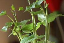 "Gardens {vegetable} / Information on ""creating"" a healthy garden."