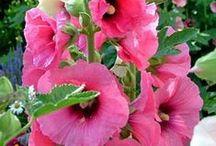 Gardens {flower}