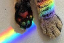 ^ kitty kats ^