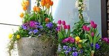 Kvety rôzne