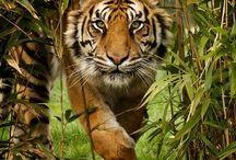 Wild animals  / WILD,BIG,DANGEROUS animals