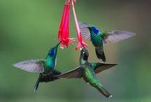 Hummingbirds / by Carol Jaquins