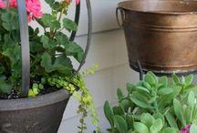 My Garden & Outdoor Projects / Garden & Outdoor Projects