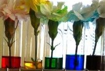 Science / Hands on science exploration for preschool aged children