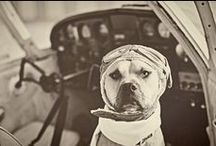Howl-O-Ween / Dogs + Halloweeen