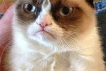 Grumpy cat•