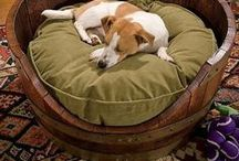 pet beds / Creative or interesting pet beds ~~  Want to join one of my boards ? Just message me at mpmaltese@gmail.com