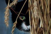 i love my CAT / cat photos and fun ~~  I love my Cat