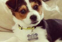 furr baby ???? / pets / by Ashley Esquibel