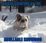 Funny dog photos ,  Funny English bulldogs, / Funny English Bulldogs,  https://www.facebook.com/groups/bullyshots/