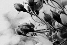 Photography - Nature (B&W)