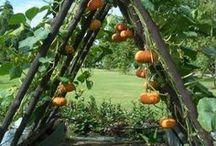 Jardin - Garden ♻️.