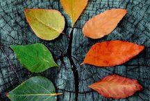 Autumn ☔️