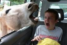 Photo-Fabulously Funny