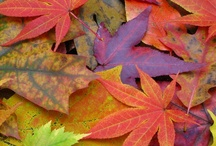 Autumn and Fall Things / by Susan Gardner