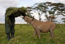 A-Animal Safari