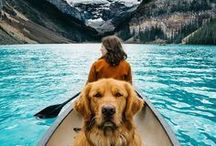 TRAVELING WITH DOGS / Bring your dog with you on the road. Here's helpful tips for travelling with your dog.
