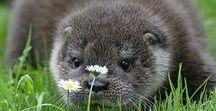 Animaux / Plein d'images d'animaux (qui sont souvent très mignons) voilà ! ^^
