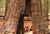 USA Séquoia National Park, CA