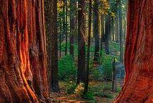 USA Redwoods State Park, CA