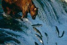 USA Alaska, AL