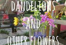 Garden / Garden {sunnydays}