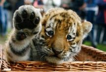 Cute animals / by Domi Sinclair