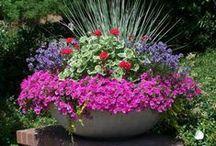Gardening / by Tina Merdinyan