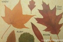Autumn Projects / {All Year Round} Autumn projects and inspiration including seasonal thoughts, pictures, activities, crafts, recipes, books, art, nature study, celebrations and more. To contribute to this board contact us at http://sunnydaytodaymama.blogspot.co.uk / by Sunny Days